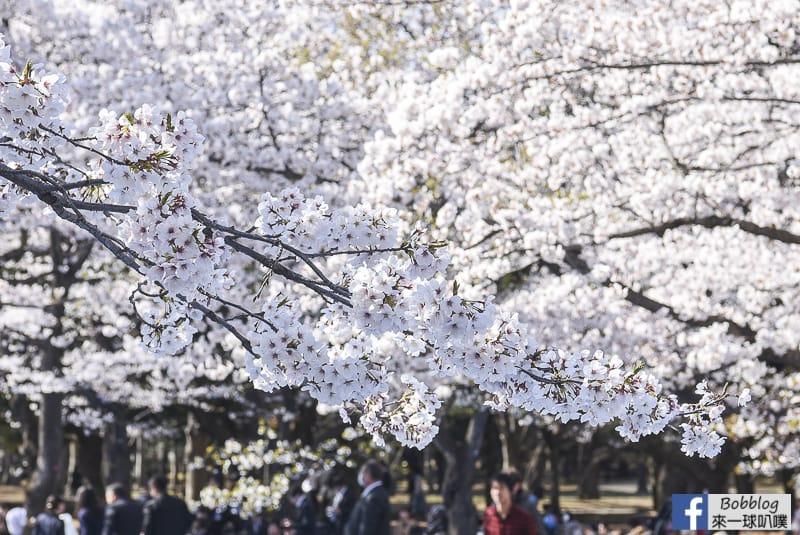 Yoyogi Park sakura 12
