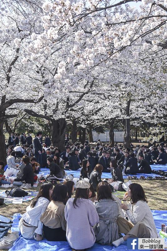Yoyogi Park sakura 15