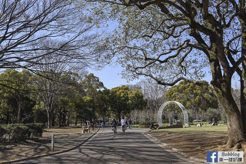 Yoyogi Park sakura 2