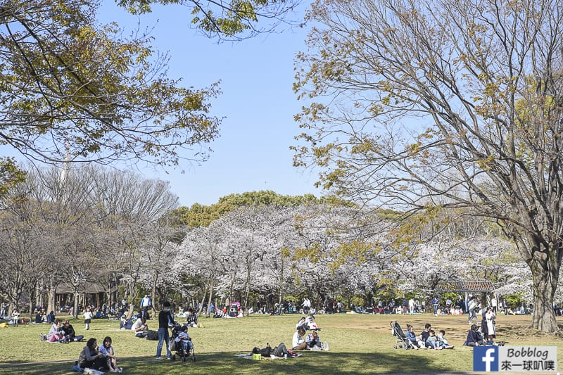 Yoyogi Park sakura 30