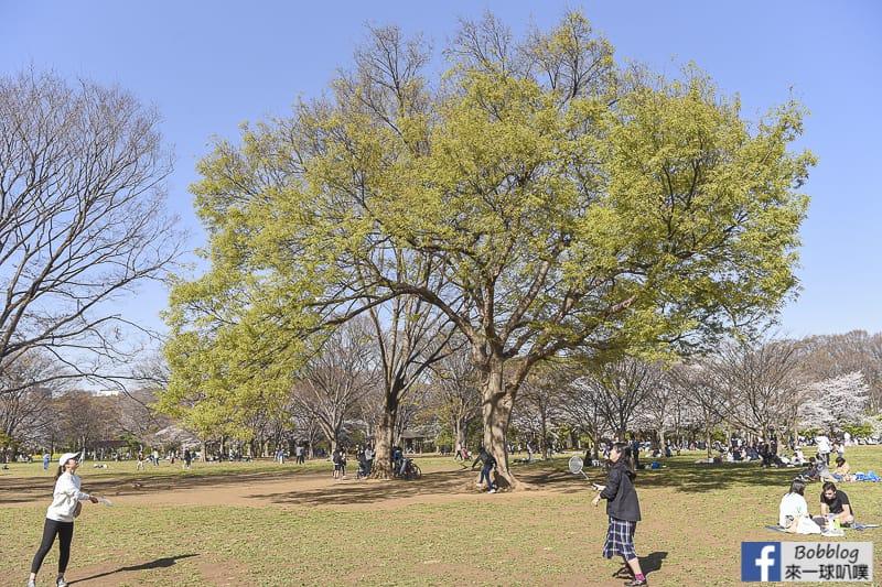 Yoyogi Park sakura 32