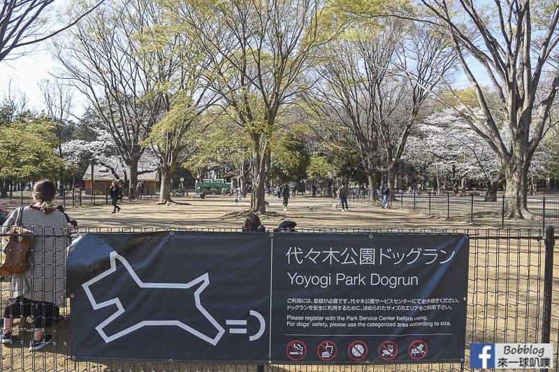 Yoyogi Park sakura 35