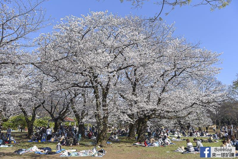 Yoyogi Park sakura 43