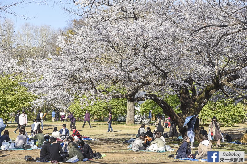 Yoyogi Park sakura 46