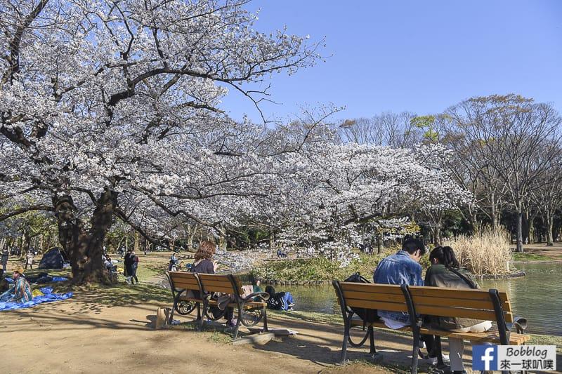 Yoyogi Park sakura 48