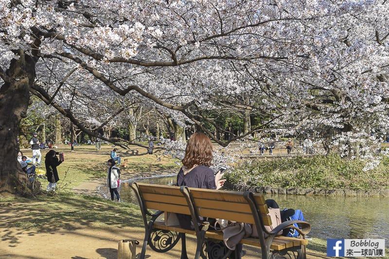 Yoyogi Park sakura 49