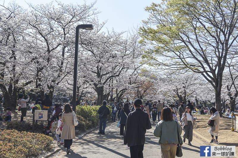 Yoyogi Park sakura 5