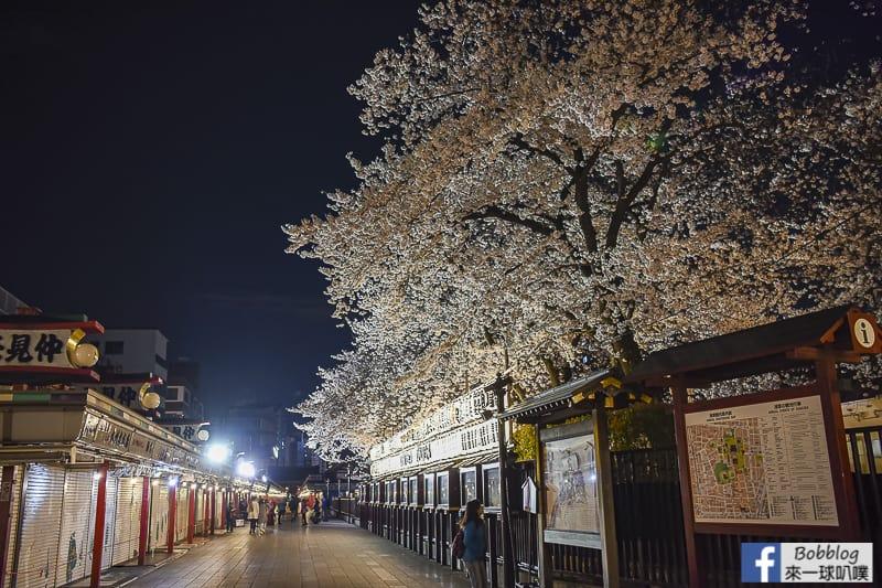 Asakusa night sakura 14