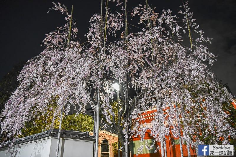 Asakusa night sakura 15