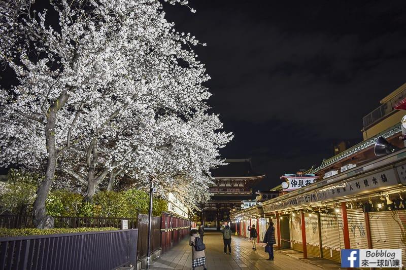 Asakusa night sakura 3
