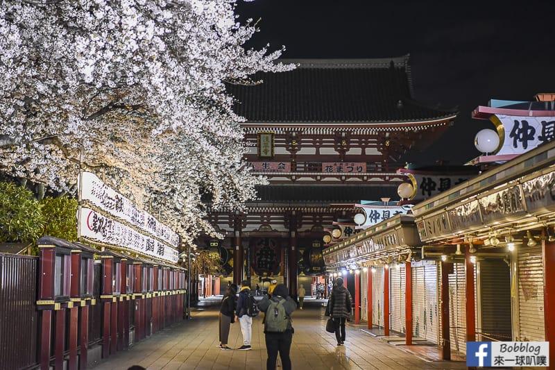 Asakusa night sakura 5