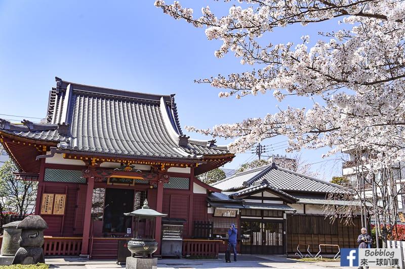Asakusa sakura 14