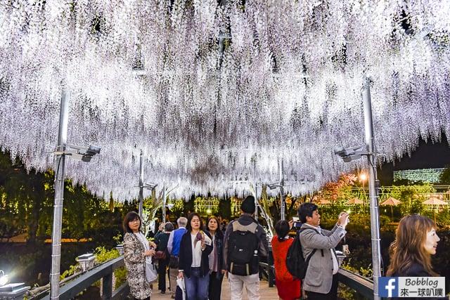日本栃木縣足利花卉公園紫藤花攻略(交通,門票,開花預測) @來一球叭噗日本自助攻略
