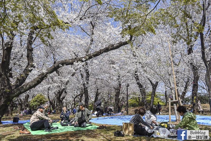Asukayama park 31