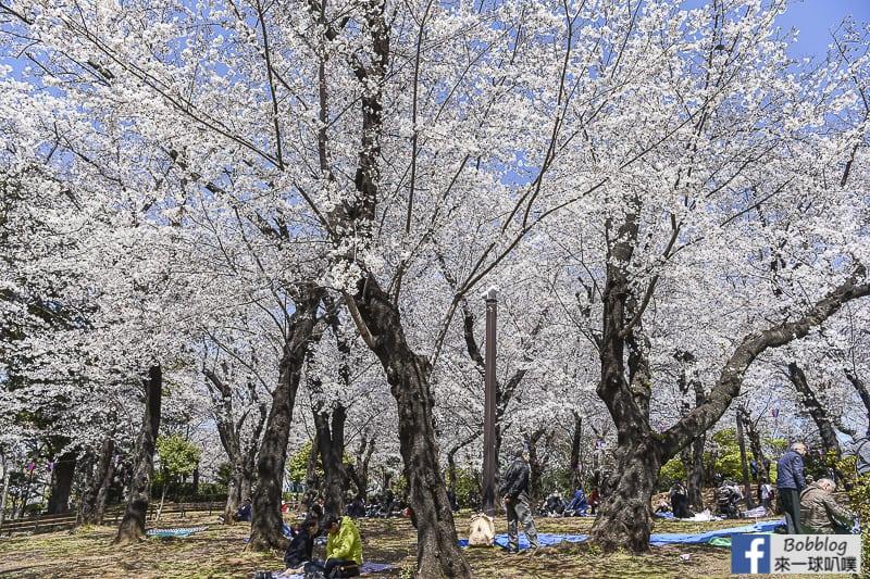 Asukayama park 32