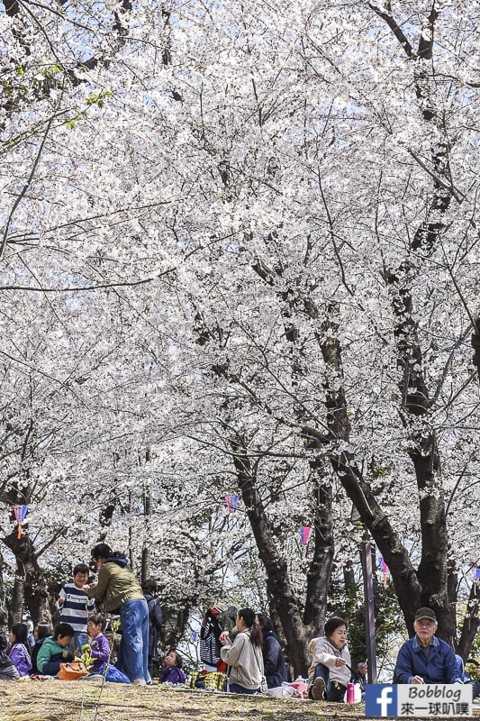 Asukayama park 33