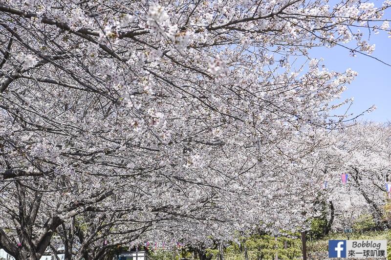 Asukayama park 6