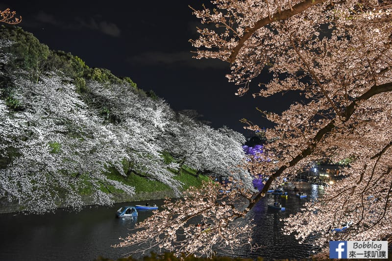 Tokyo chidorigafuchi night sakura 11