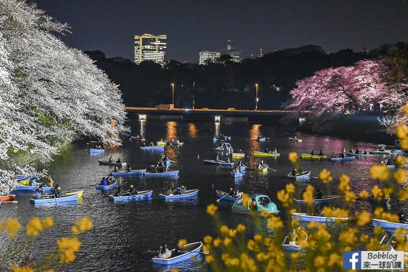 Tokyo chidorigafuchi night sakura 15