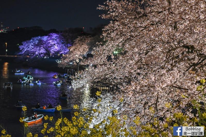 Tokyo chidorigafuchi night sakura 17