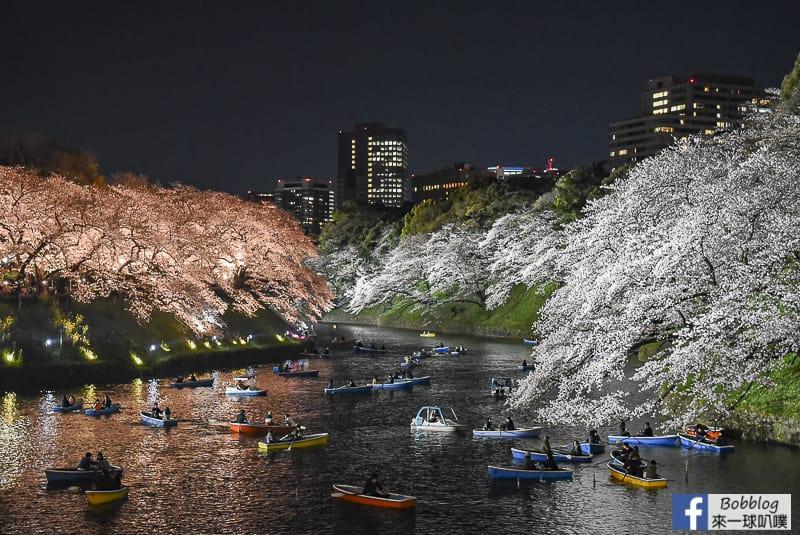 東京賞櫻-靖國神社櫻花,靖國神社夜櫻