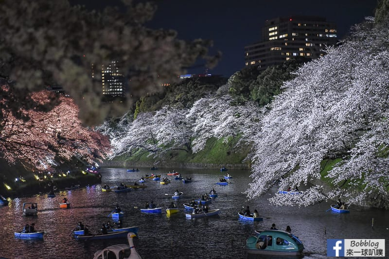 Tokyo chidorigafuchi night sakura 35
