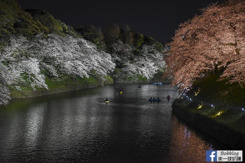Tokyo chidorigafuchi night sakura 38
