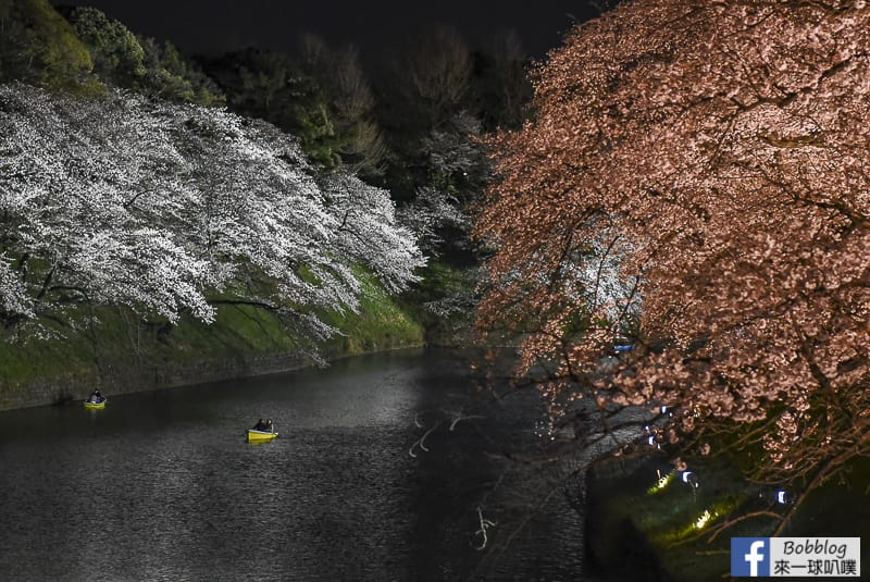 Tokyo chidorigafuchi night sakura 39