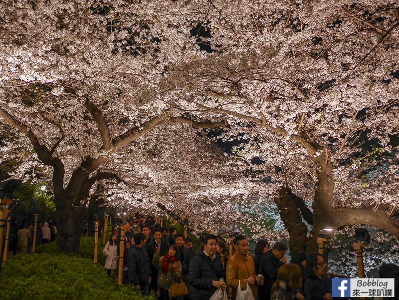 Tokyo chidorigafuchi night sakura 40