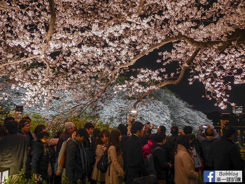 Tokyo chidorigafuchi night sakura 41