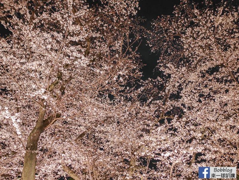Tokyo chidorigafuchi night sakura 47