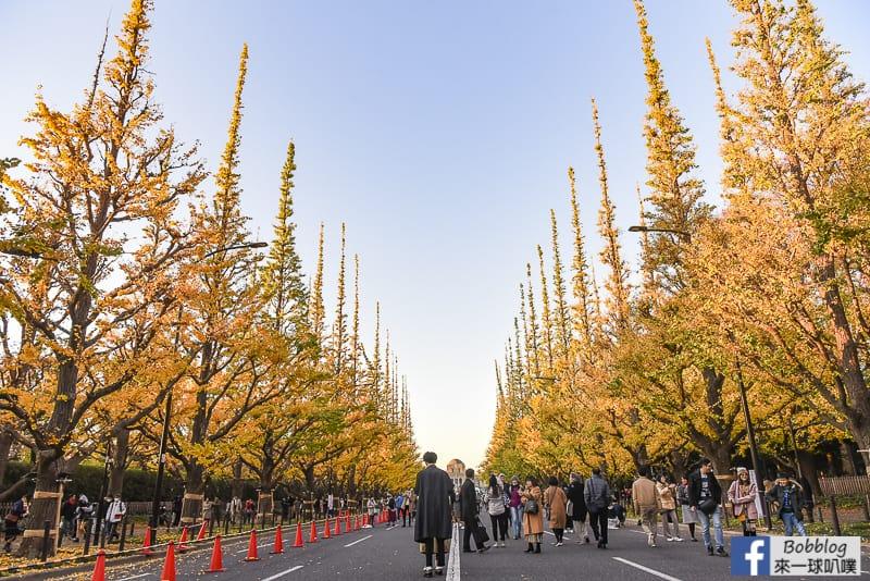 Meijijingu gaien ginkgo tree 11