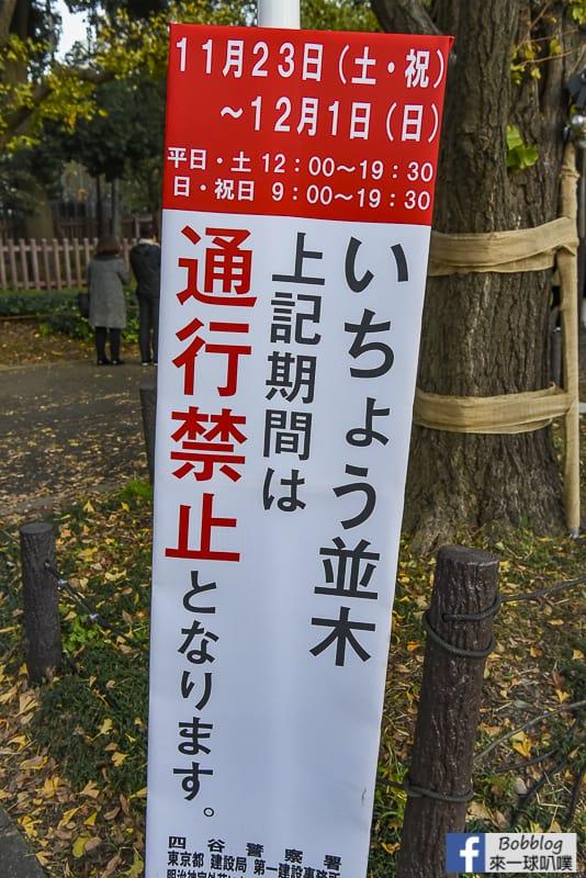 Meijijingu gaien ginkgo tree 13