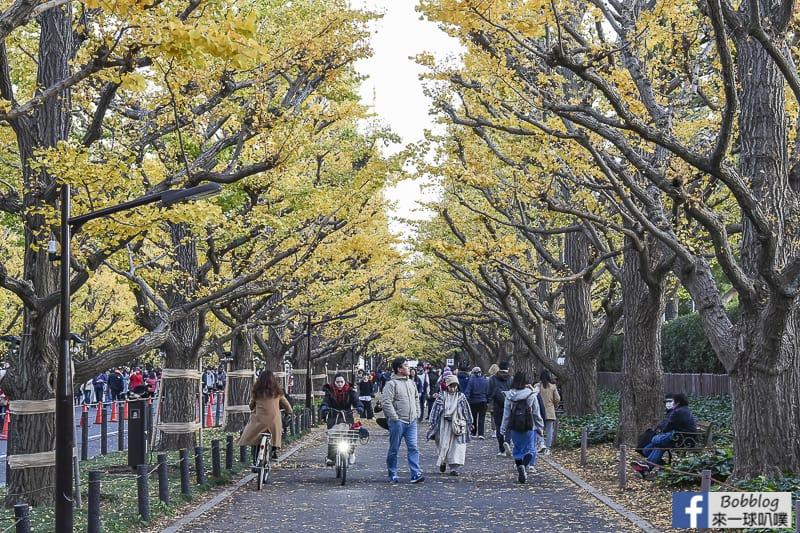 Meijijingu gaien ginkgo tree 23