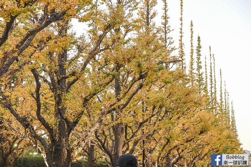 Meijijingu gaien ginkgo tree 25