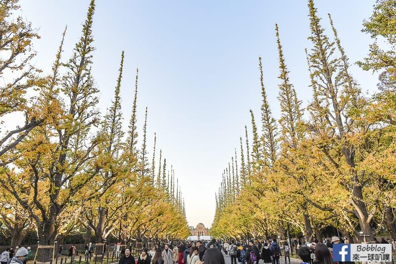 Meijijingu gaien ginkgo tree 26