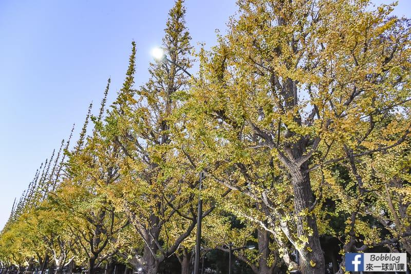 Meijijingu gaien ginkgo tree 28