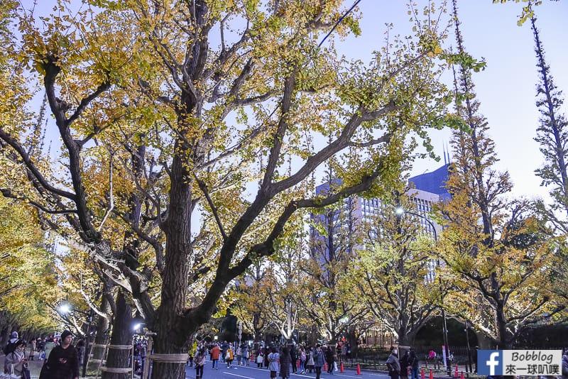 Meijijingu gaien ginkgo tree 31