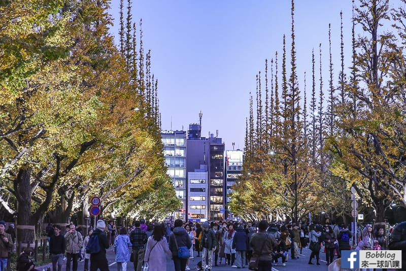 Meijijingu gaien ginkgo tree 33