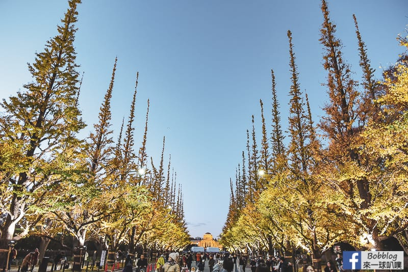 Meijijingu gaien ginkgo tree 35