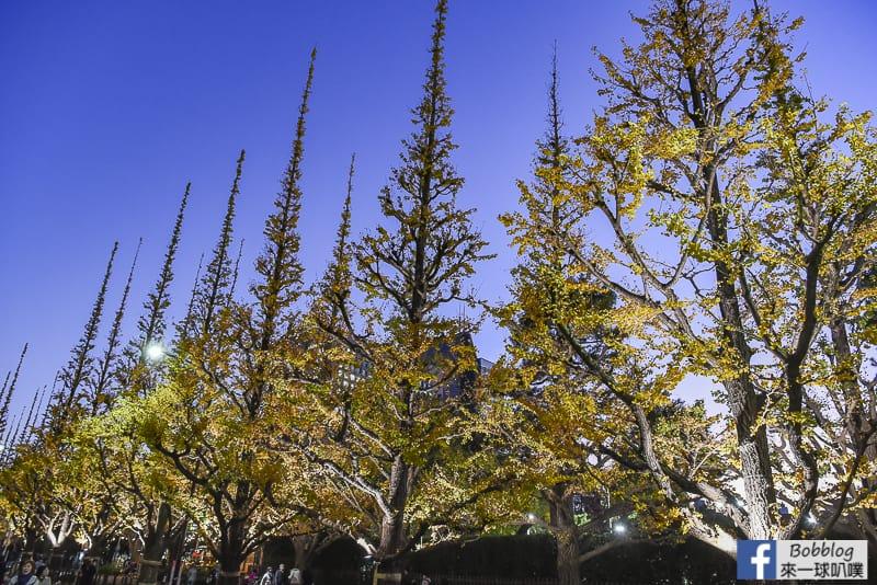 Meijijingu gaien ginkgo tree 36