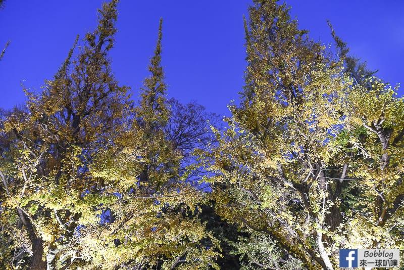 Meijijingu gaien ginkgo tree 38