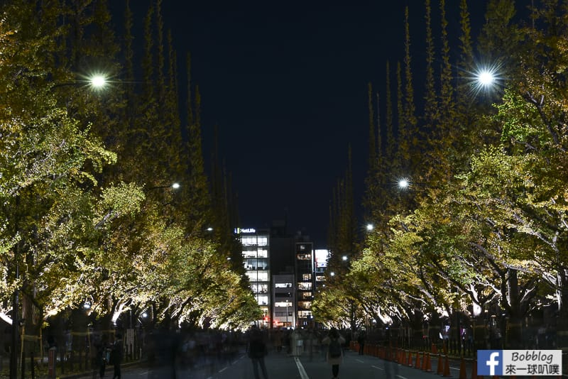 Meijijingu gaien ginkgo tree 41