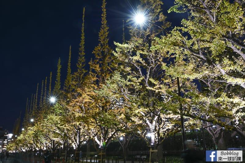 Meijijingu gaien ginkgo tree 42