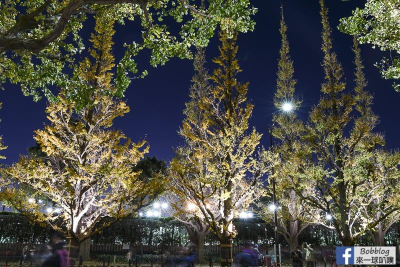 Meijijingu gaien ginkgo tree 43