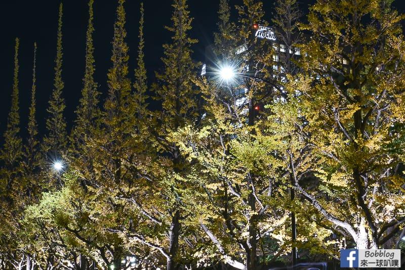 Meijijingu gaien ginkgo tree 46