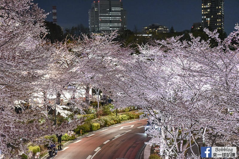 Midtown night sakura 14