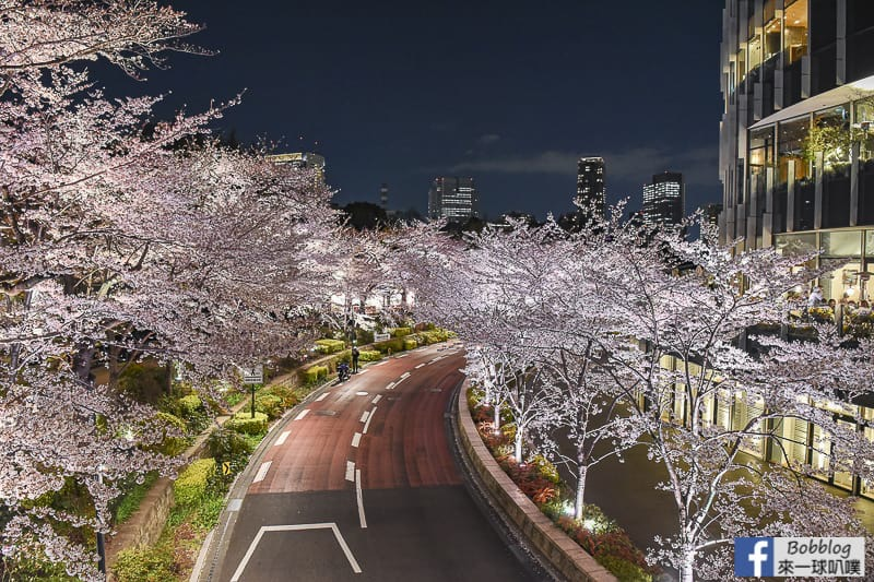 Midtown night sakura 16