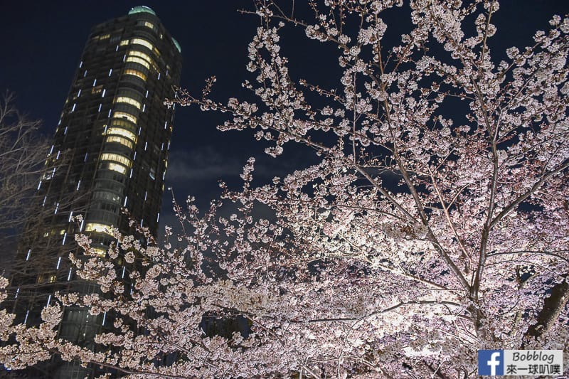 Midtown night sakura 18