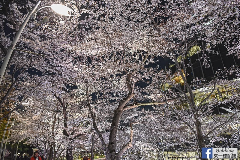 Midtown night sakura 20